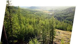 Леса Якутии